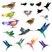 Birds set — Stock Vector