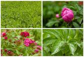 Collage-blumen und pflanzen. — Stockfoto