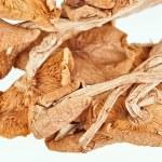 Dried armillaria (fairy-ring ) mushrooms isolated on white — Stock Photo #3320648
