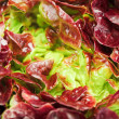 Stock Photo: Red cabbage lettuce head background