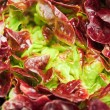 Red cabbage lettuce head background — Stock Photo
