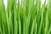Fresh new green grass background — Stock Photo
