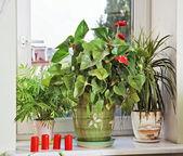 Bloemen en rode kaarsen op vensterbank — Stockfoto