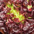 Red cabbage lettuce head background — Stock Photo #3488658