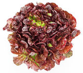 Red cabbage lettuce head isolated on white — Stock Photo
