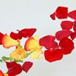 Stock Photo: Red and yellow rose petals floating in water