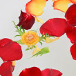 Red and yellow rose petals floating in water - Stock Photo