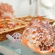 Sea shell decor on bathroom shelf — Stock Photo
