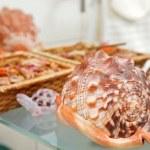 Sea shell decor on bathroom shelf — Stock Photo