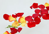 Red and yellow rose petals floating in water — Stock Photo