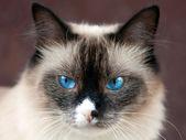 Cat animal — Stock Photo