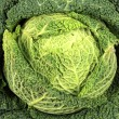 Savoy Cabbage closeup — Stock Photo