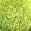 Green grass background — Stock Photo #2979834