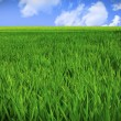 Royalty-Free Stock Photo: Grass field and sky