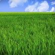 Stock Photo: Grass field and sky