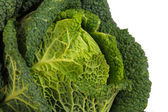 Savoy Cabbage closeup — Stock Photo