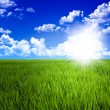 Stock Photo: Green grass field and sky