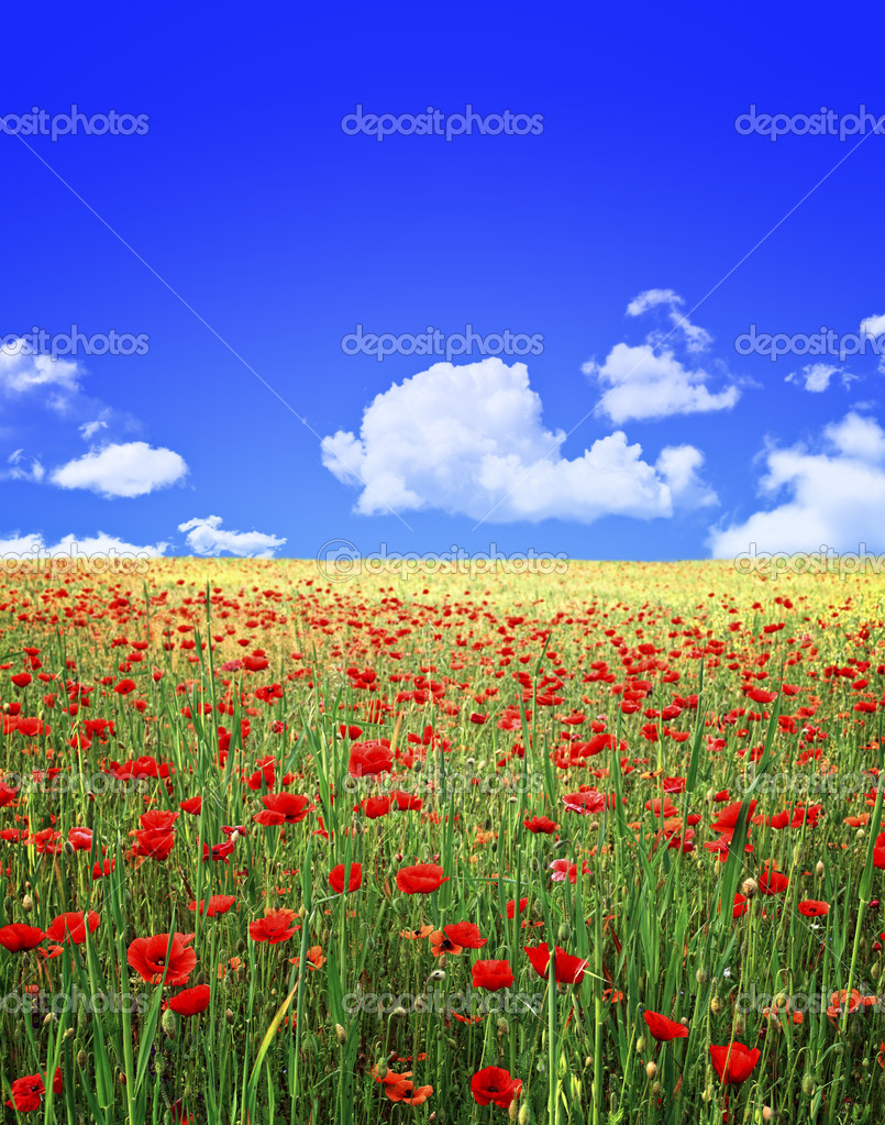 Poppies field and blue sky background — Stock Photo #3031860