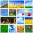 Field background — Stock Photo