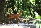 Estimado en bosque — Foto de Stock