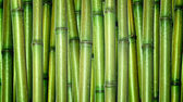 Fresh bamboo background — Stock Photo