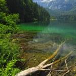 Italian alps tovel lake — Stock Photo