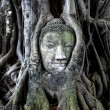 Buddha head in tree - Foto Stock
