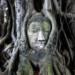 Buddha head in tree - Stock fotografie