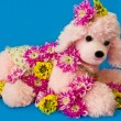 The pink puppy among pink chrysanthemums — Stock Photo