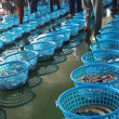 Stock Photo: Fish Auction in Taiwan