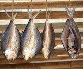 Fish Hanging to Dry — Stock Photo