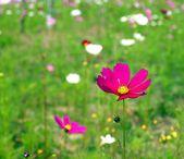 Prado de verão com flores — Foto Stock