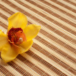Yellow Orchid on bamboo napkin — Stock Photo