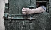 Escape from captivity — Stock Photo
