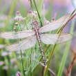 Dragonfly waiting for sun — Stock Photo #3646546
