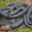 Three snakes - Stock Photo