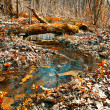 Wood creek. Autumn solar day in wood. - Stock Photo