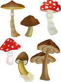 Wood mushrooms — Stock Vector