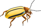 Insect a bug — Stock Vector