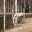 Horse watering - Stock Photo
