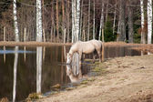 Horse watering — Stock Photo