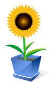 Sunflower spot concept — Stock Vector