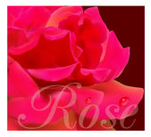 Beautiful red rose — Stock Vector