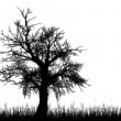 Old tree silhouette - Stock Vector