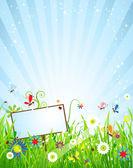 Summer meadow beautiful — Stock Vector