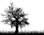 Old tree silhouette — Stock Vector
