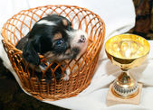 Puppy and Cup — Foto de Stock