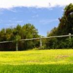 Bright green lawn — Stock Photo
