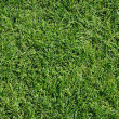 Green grass — Stock Photo #2815362