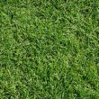 Green grass — Stockfoto